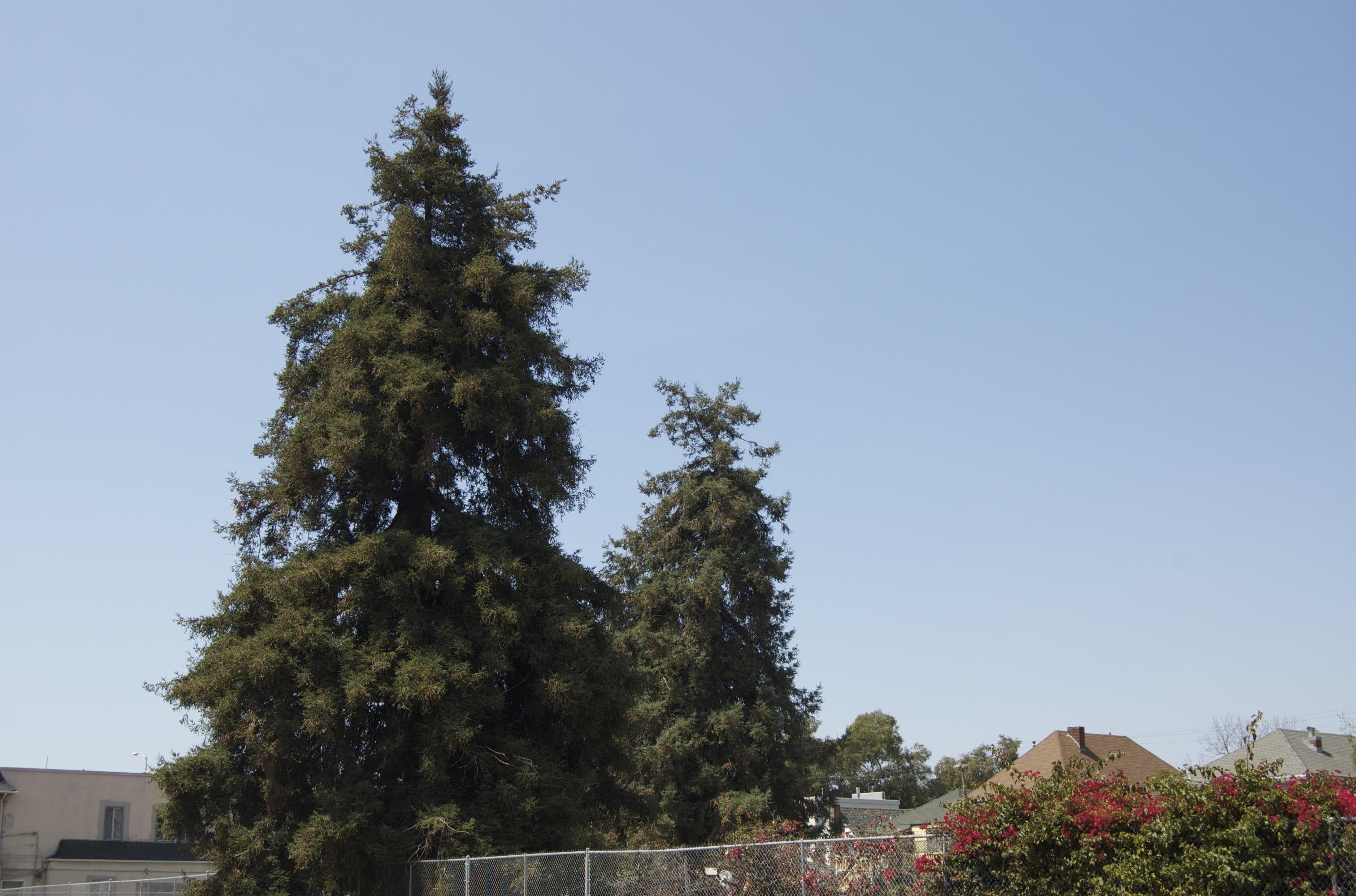 tree_horiz